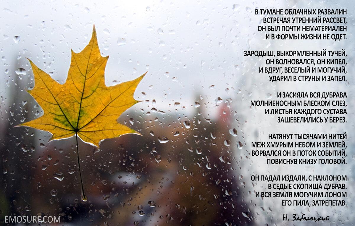 статусы в картинках про осень с дождем спустя некоторое время