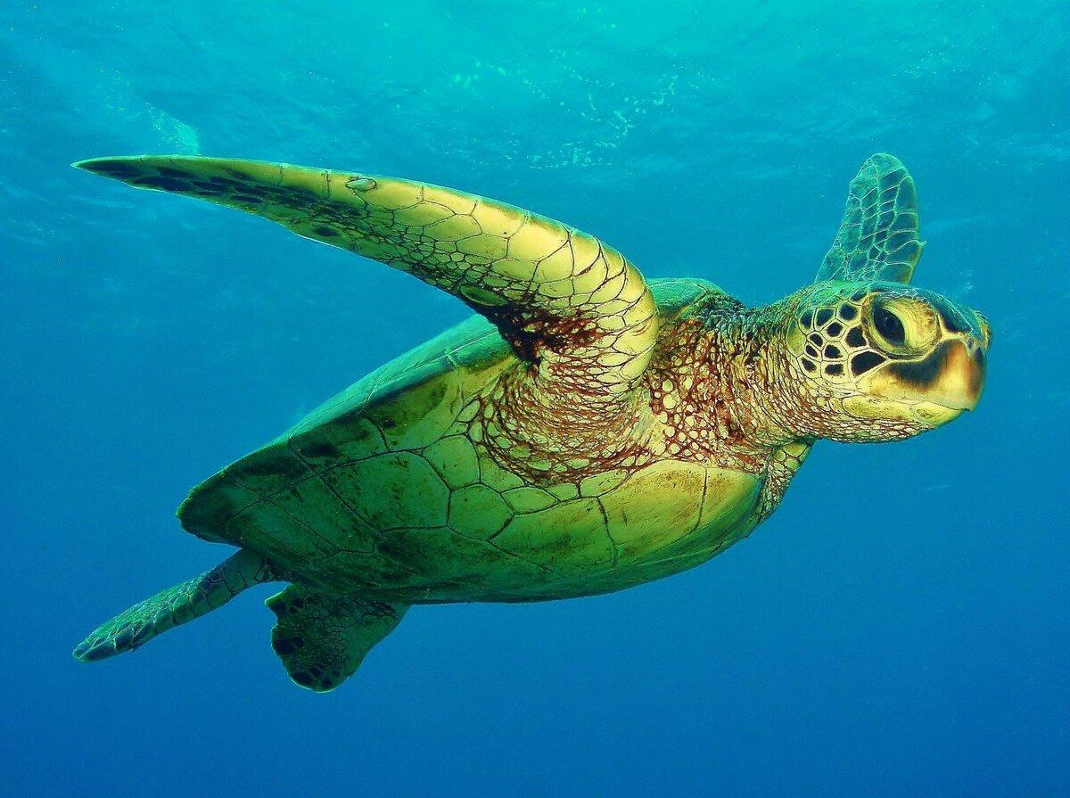обитатели атлантического океана фото и названия том, как