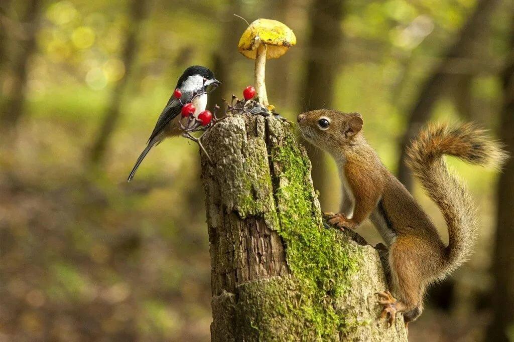 Веселые картинки в лесу
