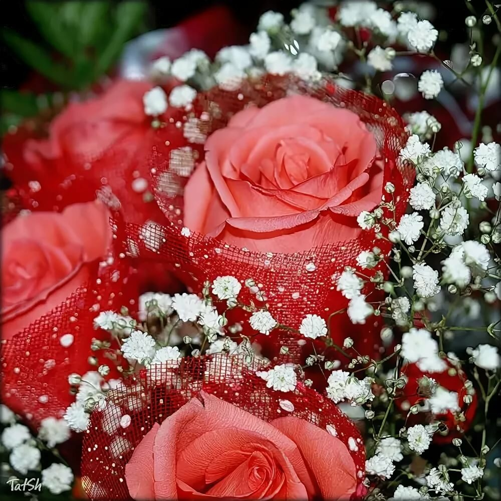 картинки розы для милой татар