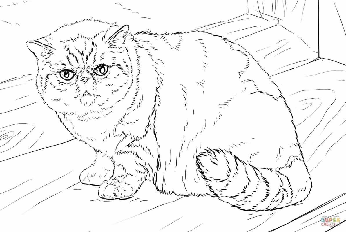 степным видам, реалистичные коты раскраска небольшой высоты, компактными