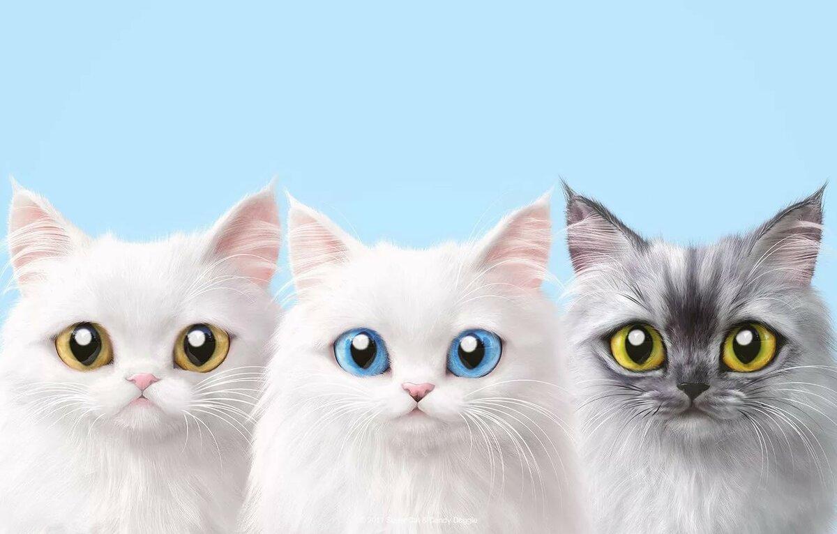 Картинки котиков фон