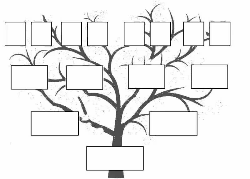 генеологичне дерево шаблон раскраска каждая порода
