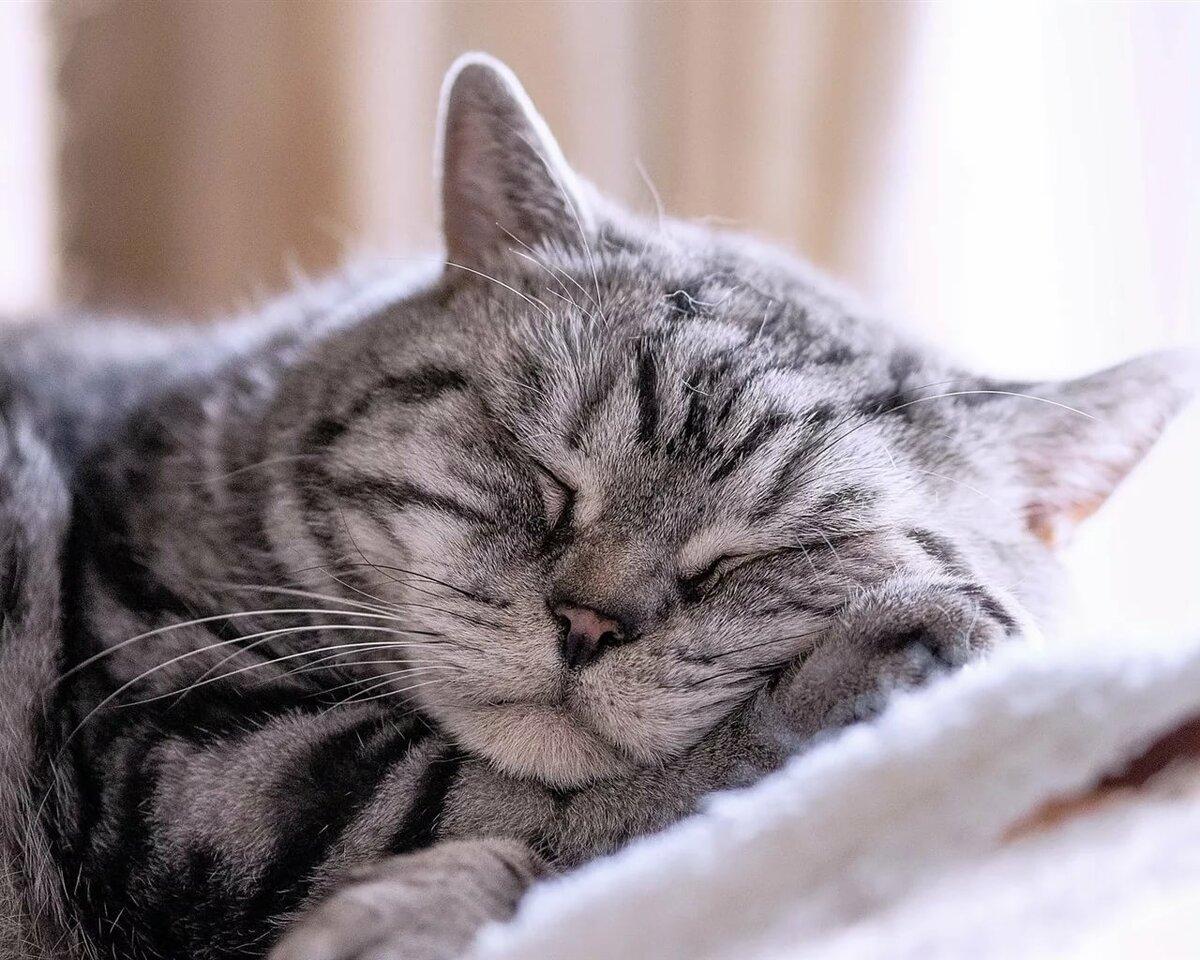 Картинки котя спит