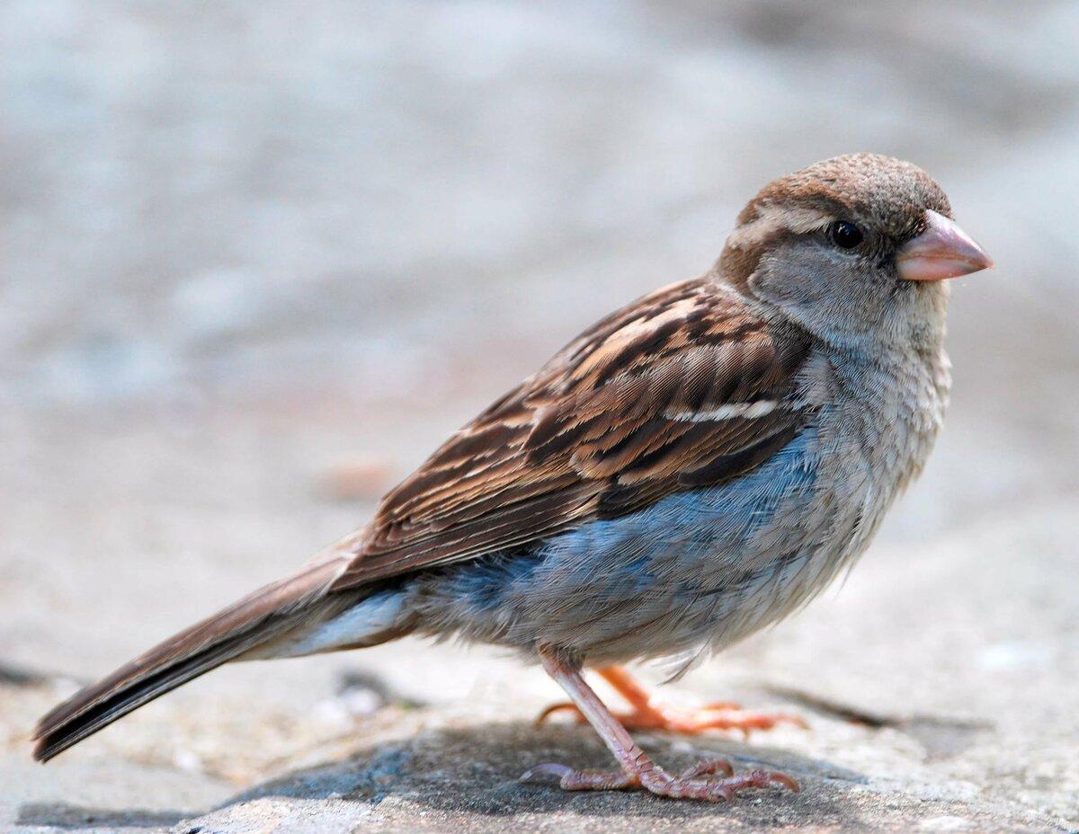 картинки воробьинообразных птиц вижу, как кто-то