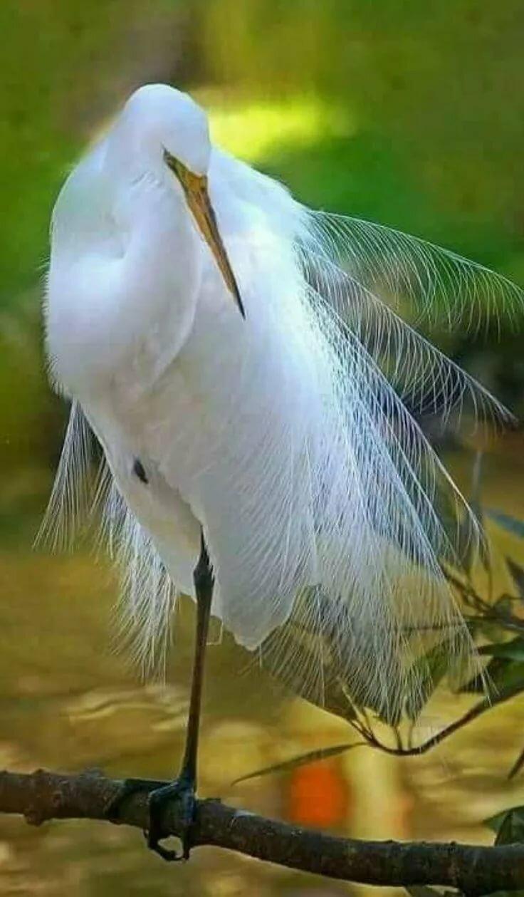 Pin by 📌 ❤ 📌 Teresa Hughes 📌 ❤ 📌 on BIRDS Birds, Pet birds, Wild birds