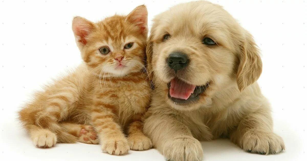 Открытки с котятами и собаками