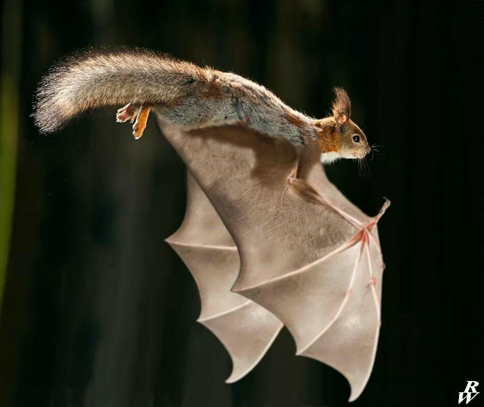 Животные летающие картинки