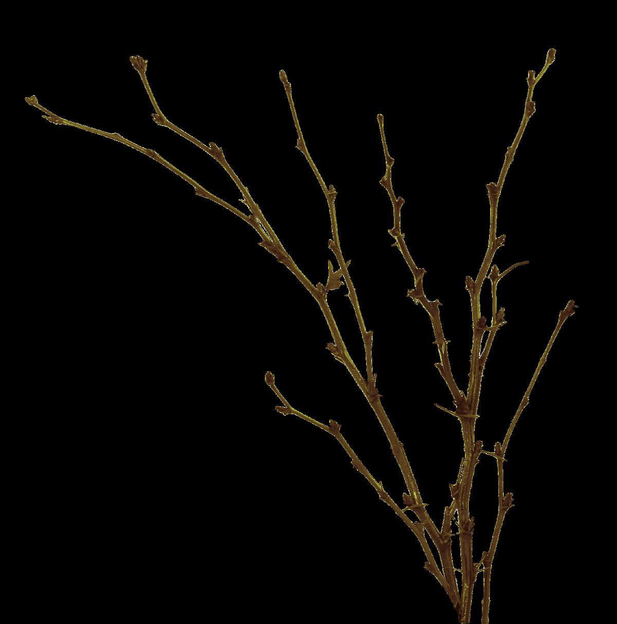 Картинки с веточкой без листьев