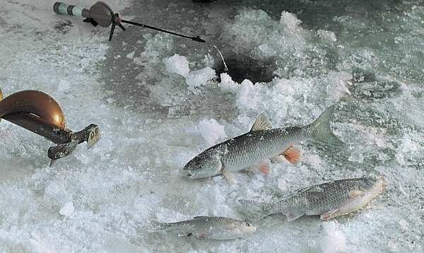 Зимния рыбалка на головля