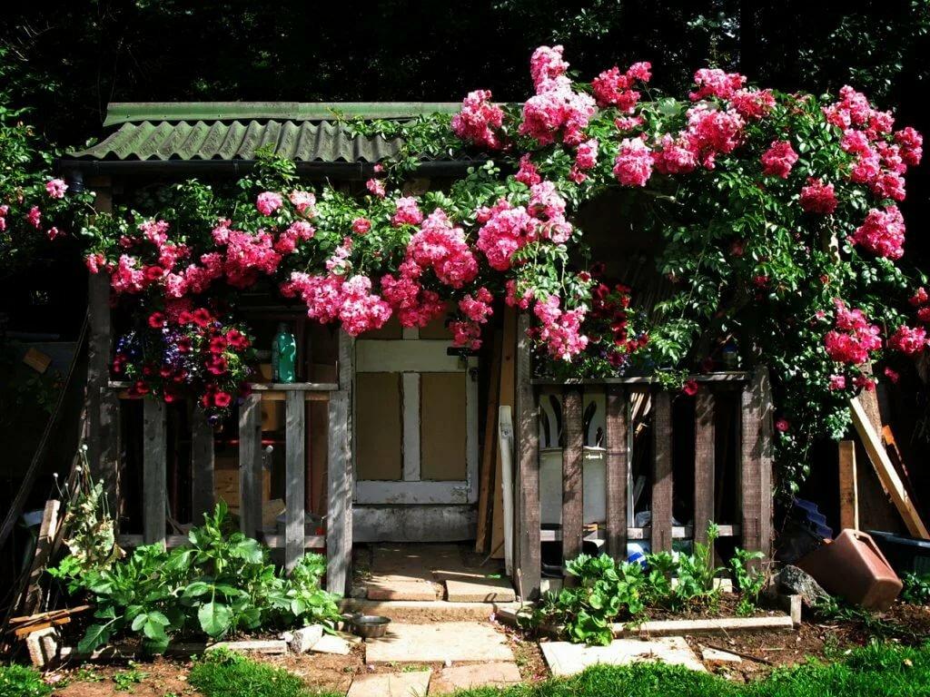 Дом и розы в саду картинки