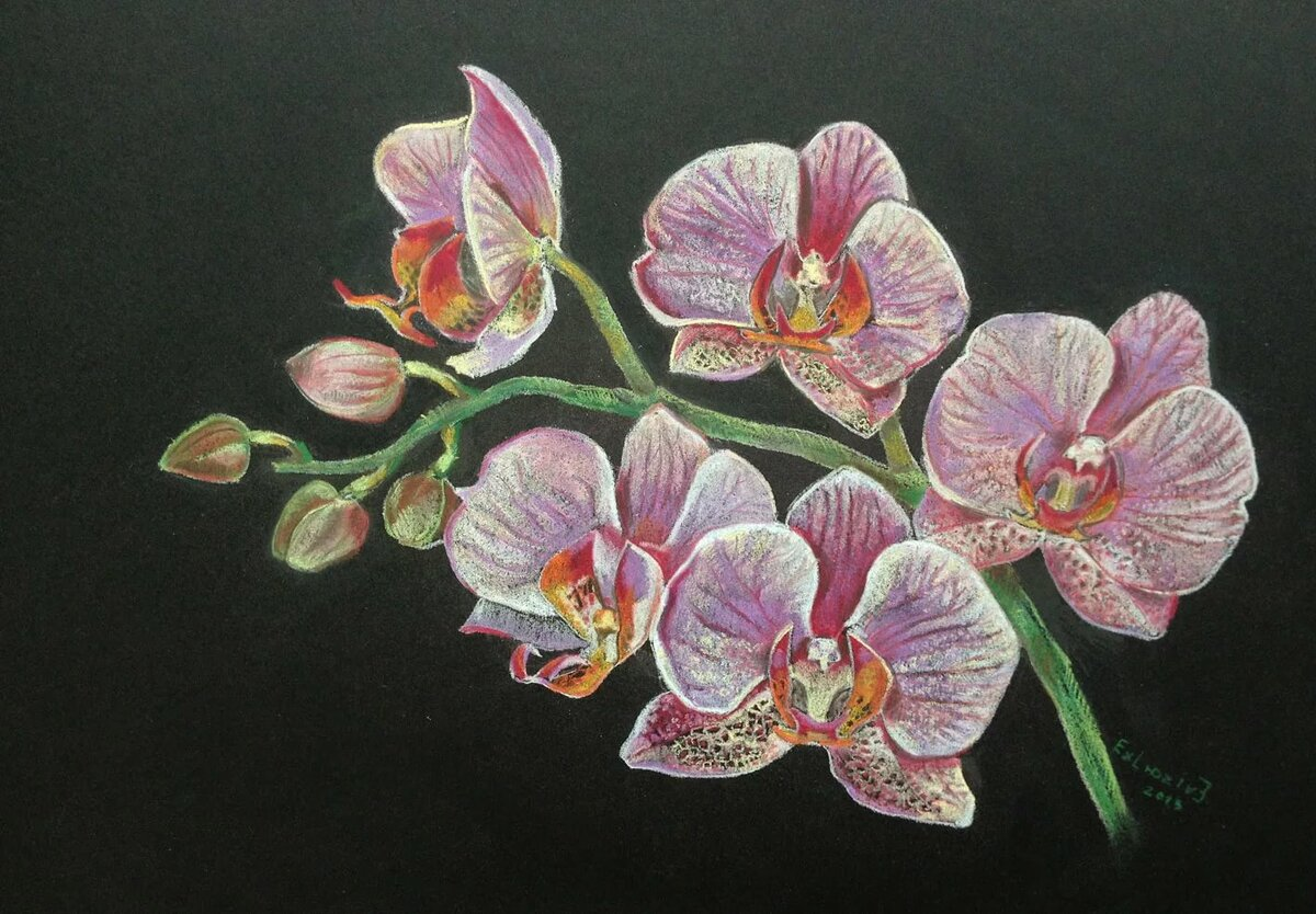 орхидеи картинки на бумаге биографии