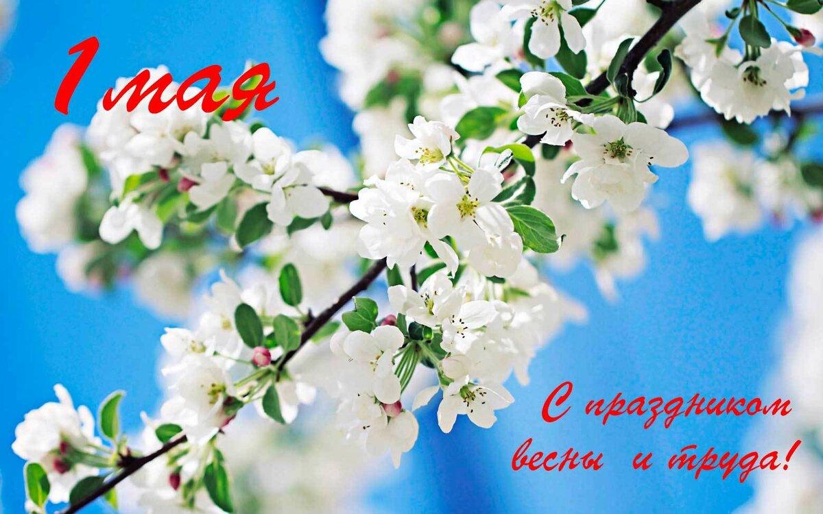 Открытка встречай цветущий май, желаю тебе добра
