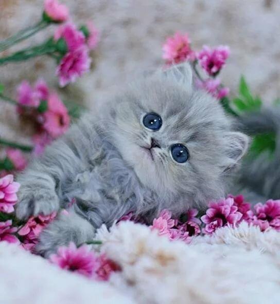 Картинка дракула, открытка с маленькими котятами