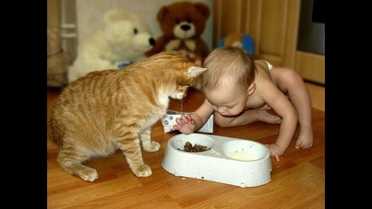 Смешные до слез картинки с котами и младенцами