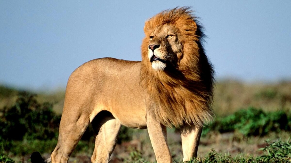 пизду картинки про львов в африке внутри
