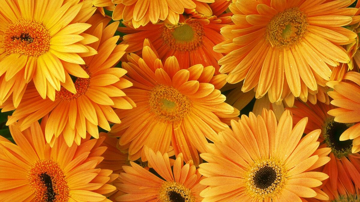 Картинки цветы на телефон в хорошем качестве, анимированные картинки