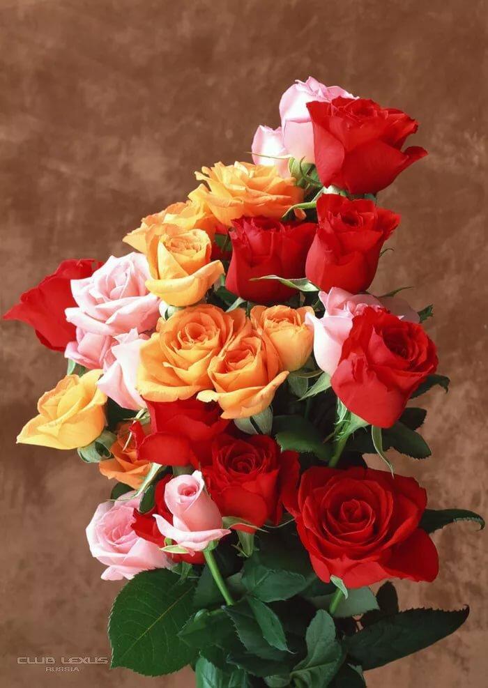 Красивые картинки букеты цветов с днем рождения, царица смешные картинки