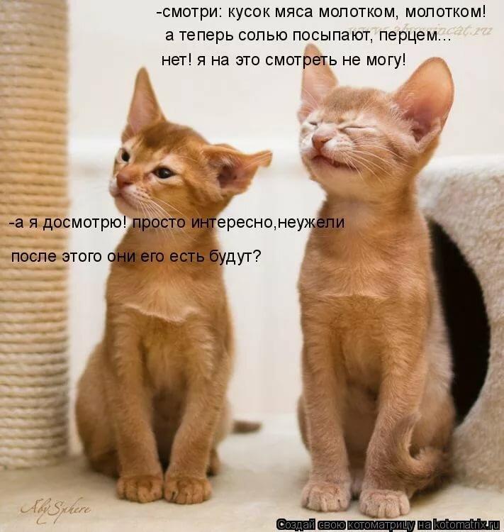 Картинки про кошек с прикольными надписями
