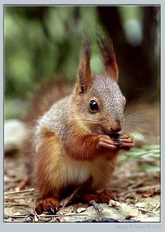 Картинки животных живущих в лесу