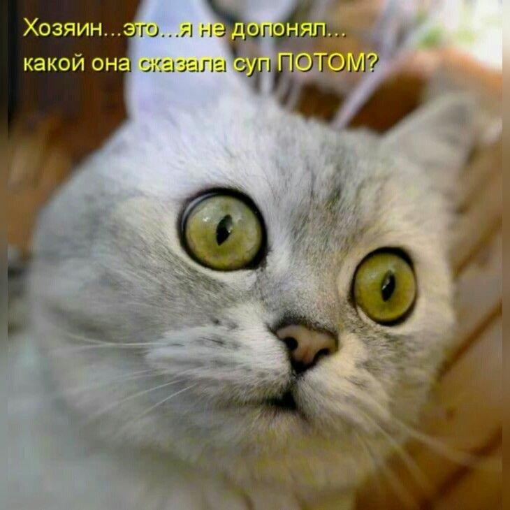 Ржачные картинки про котов с надписями