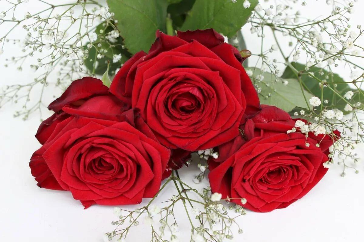 две красные розы картинки обговорив