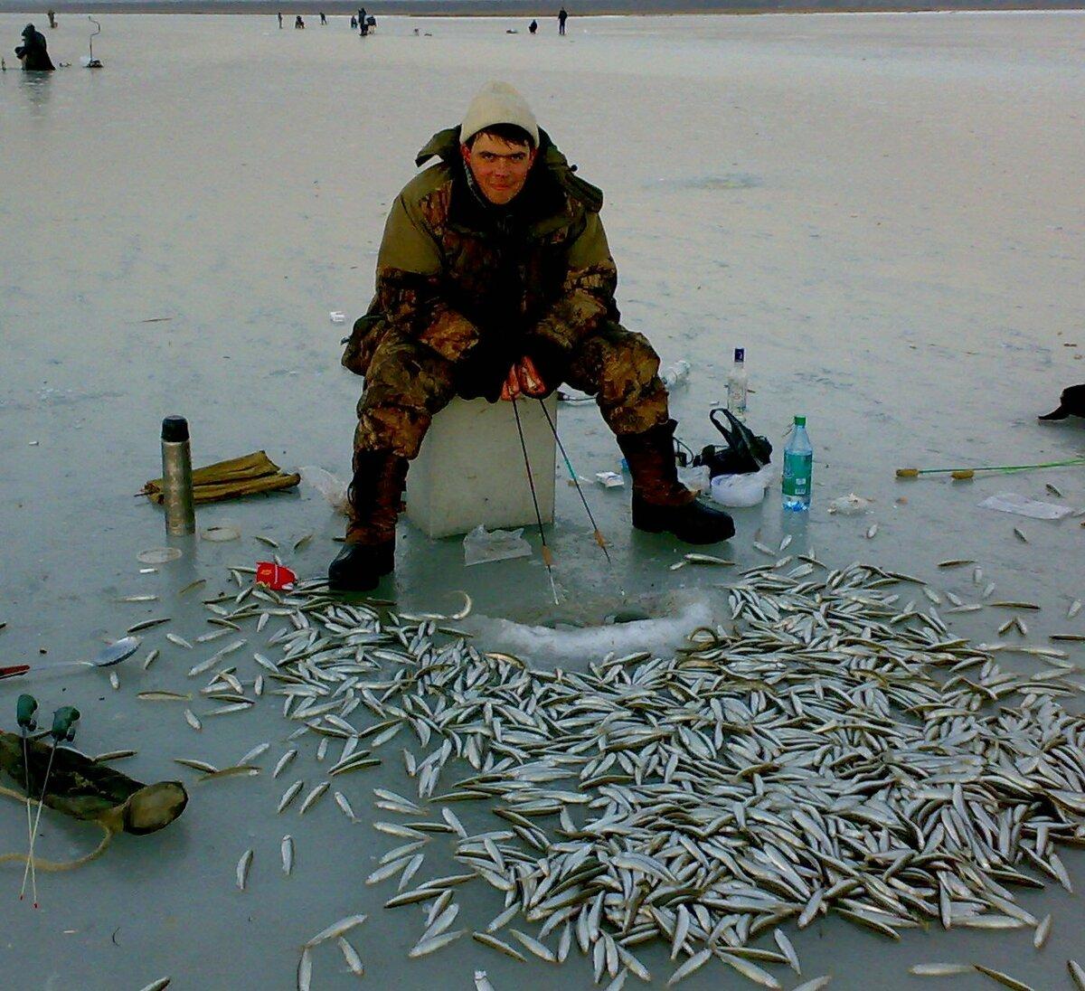 Корюшка рыба где ловят