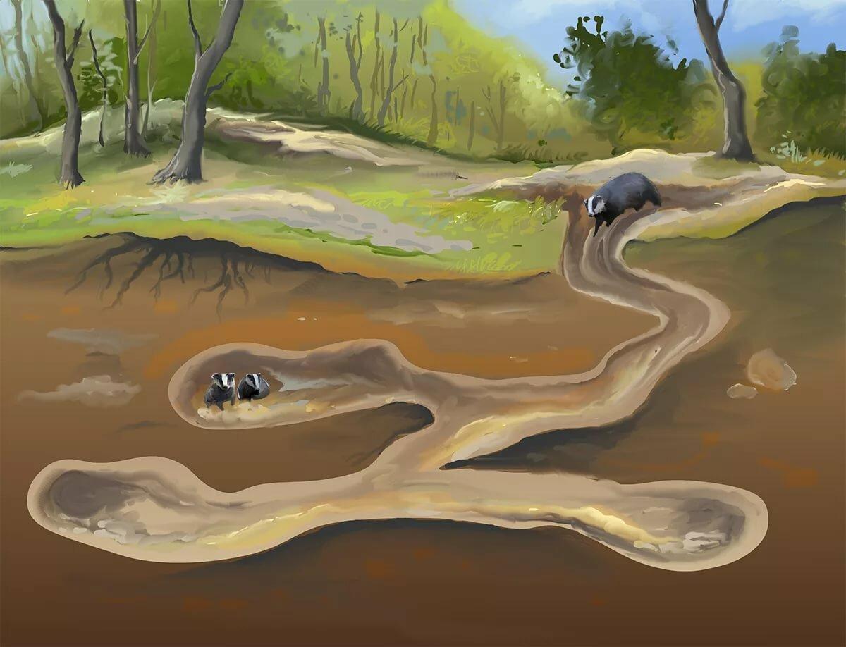 Картинки норы барсука