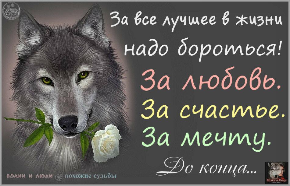 Картинки про волчицу с надписями