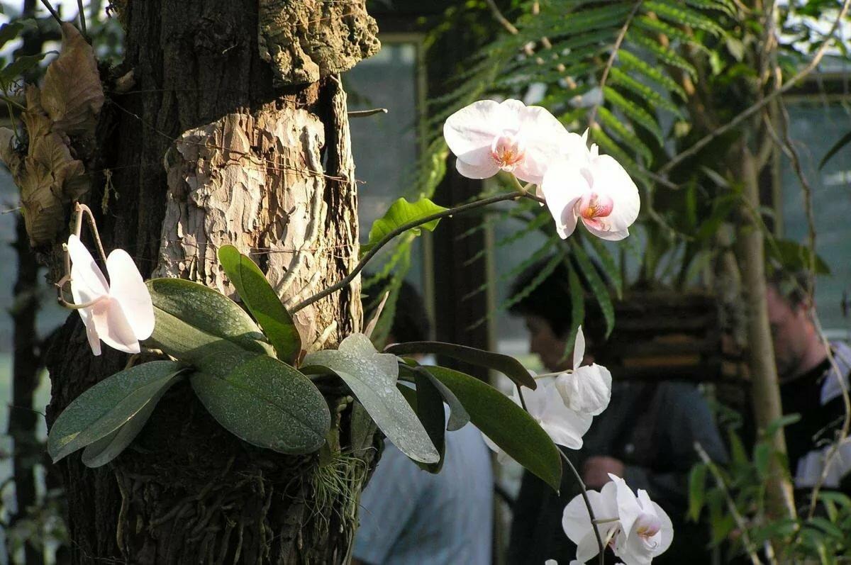 орхидеи в дикой природе фото его устроился