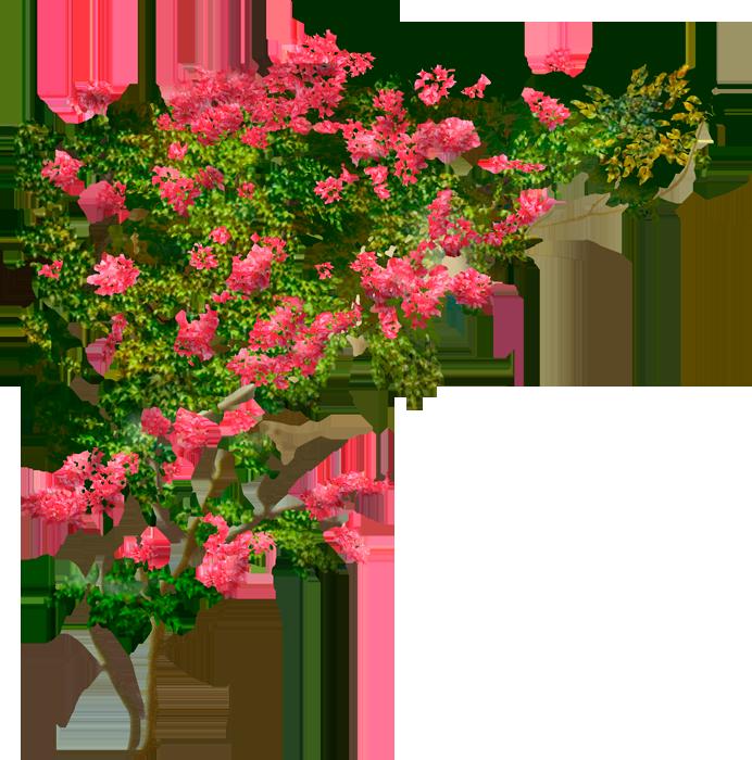 Красивые картинки вьющихся цветов