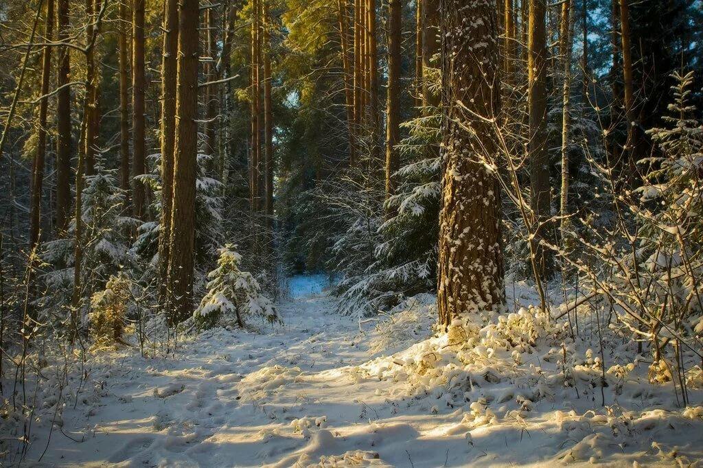 дравидские фото зимний художественный пейзаж леса черте