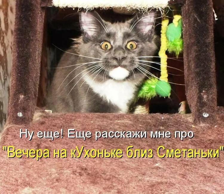 Картинки про кошек с подписями