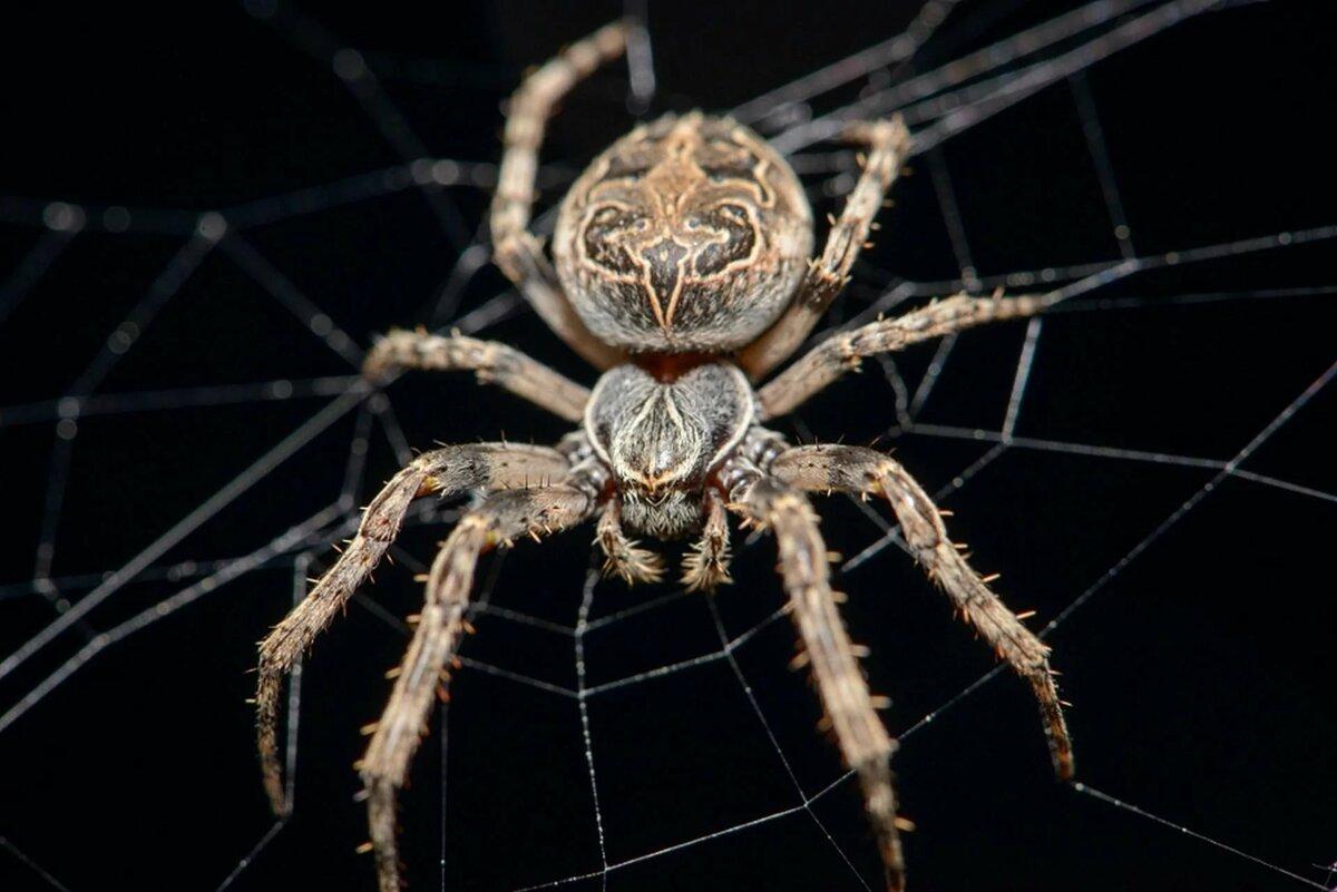 Открытки пауков