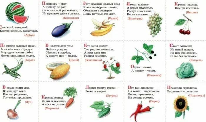Загадка с фруктами картинка ответы