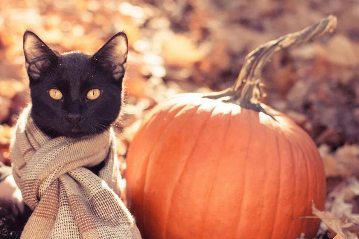 Осень смешные картинки красивые
