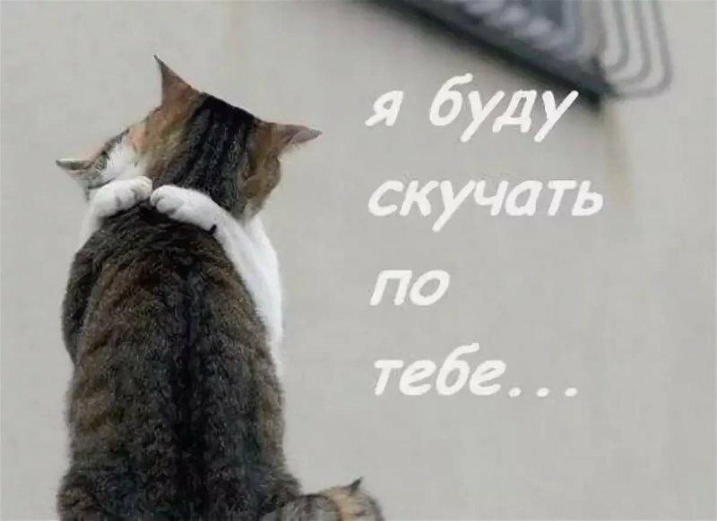 Картинки котиков с надписью скучаю плетения