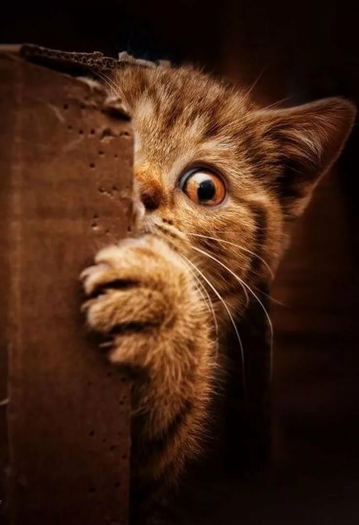 Pin by Thorni on makes me smile Cats, Cute cats, Crazy cats