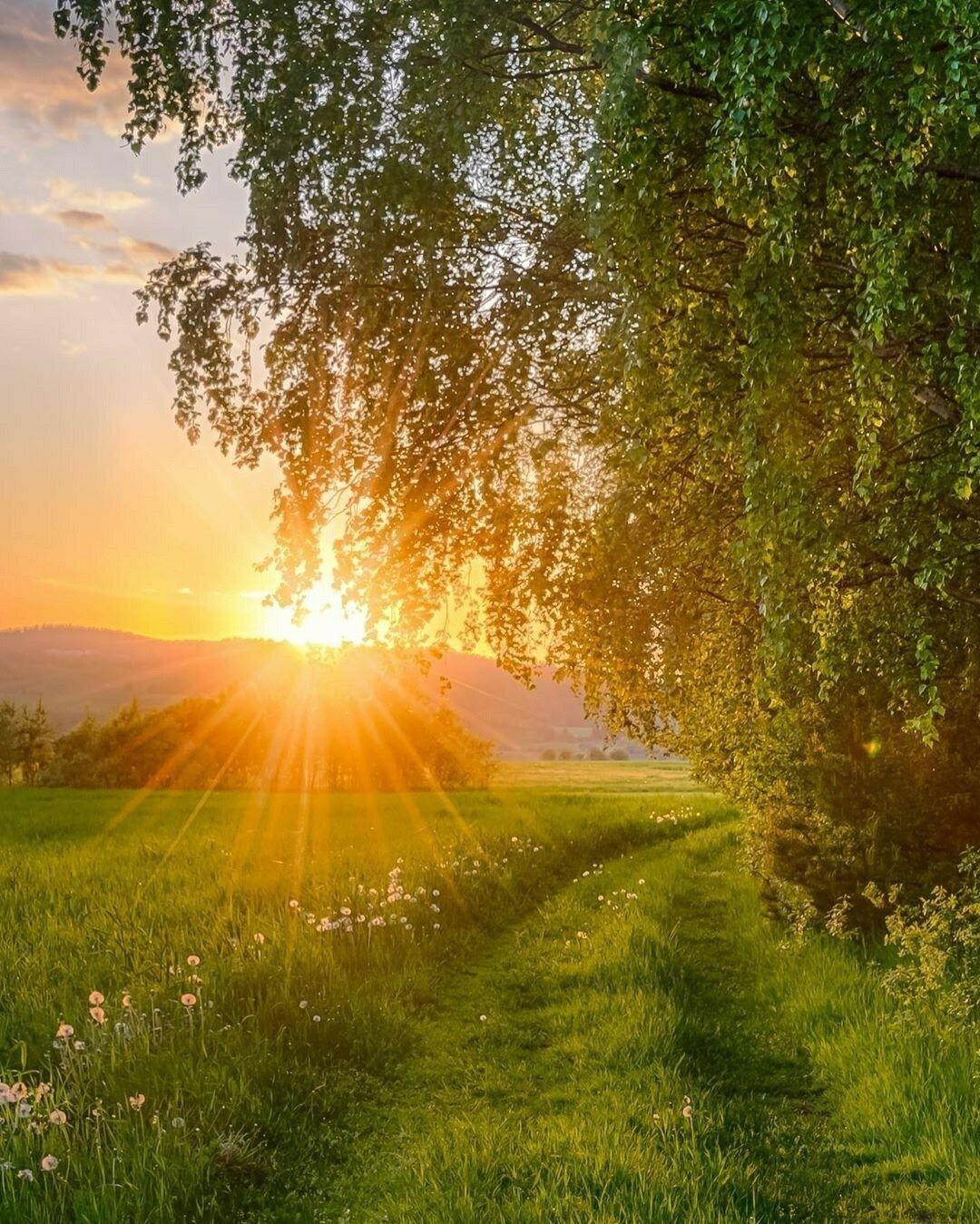 утро лето рассвет солнце красивые картинки однажды