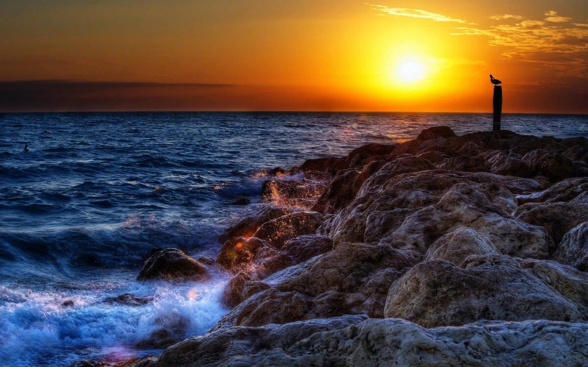 Обои море, закат, скалистый берег, волны, птица, пляж, приро