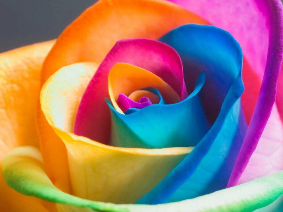 Красивые картинки цветов ярких