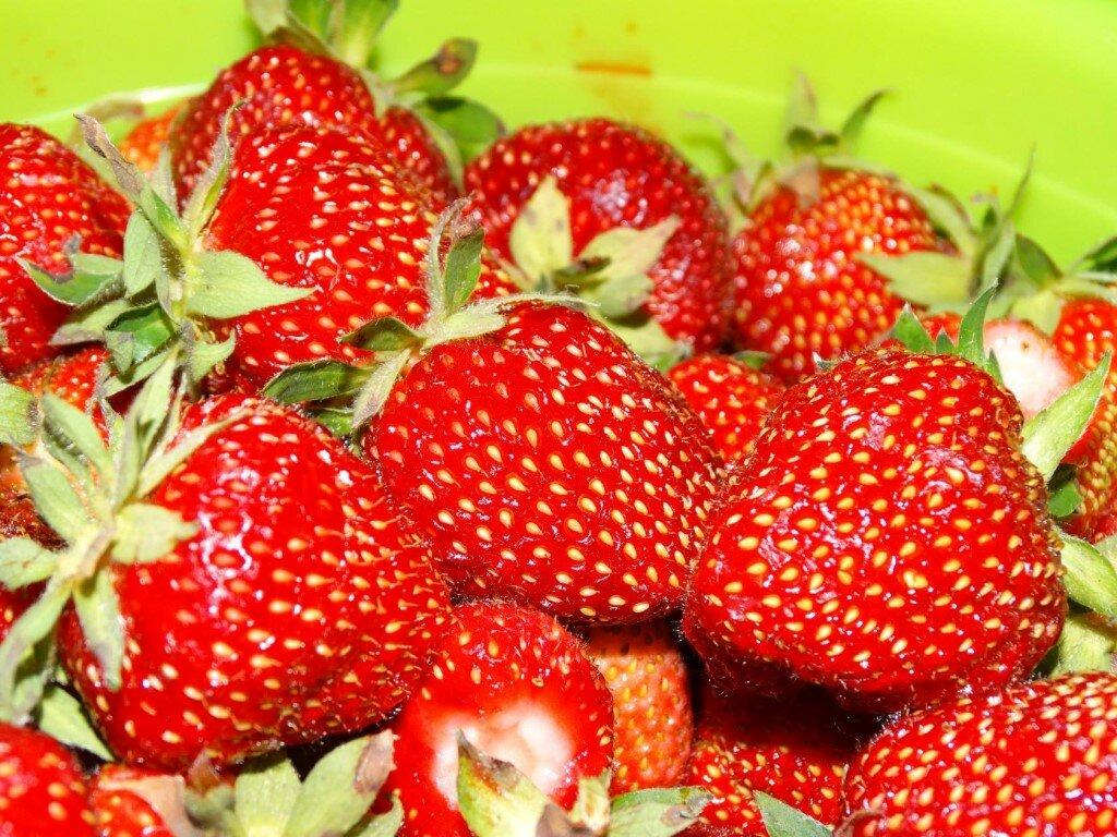 Домашняя ягодница клубника и земляника в Тобольске