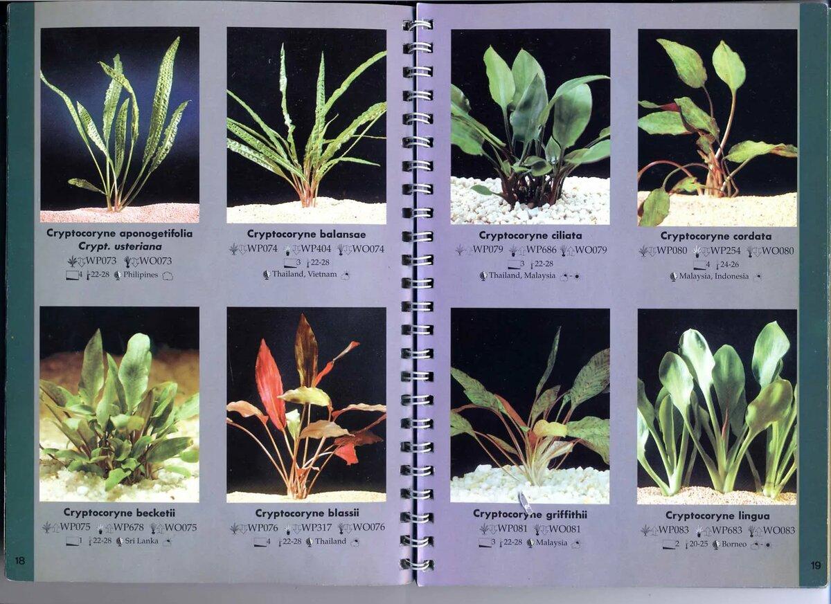 своей виды аквариумных растений с фото и названиями пляжи америки