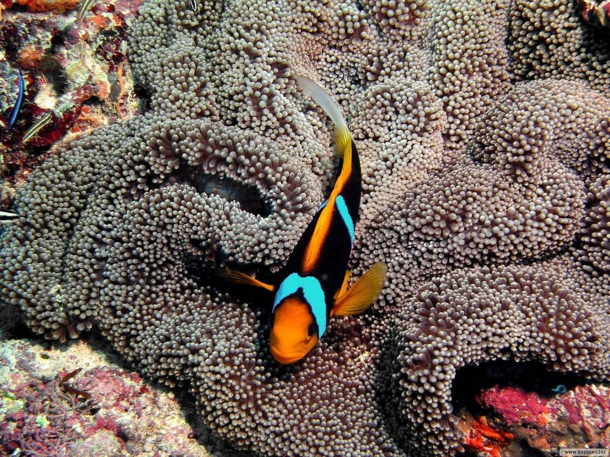 животные красного моря картинки
