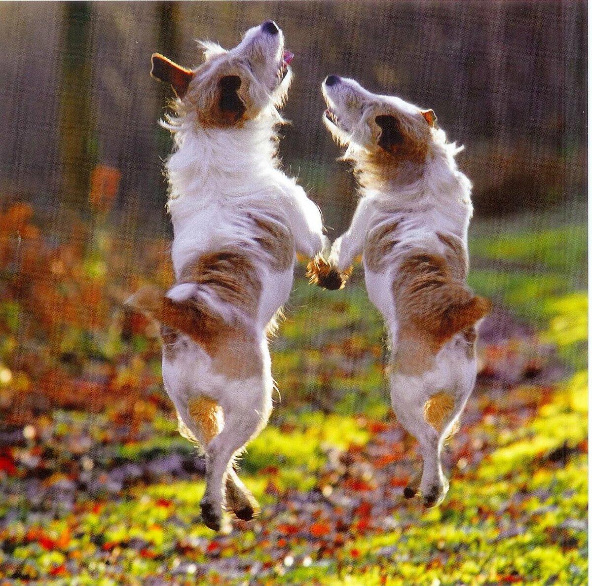 зверюшки танцуют картинки консистенции