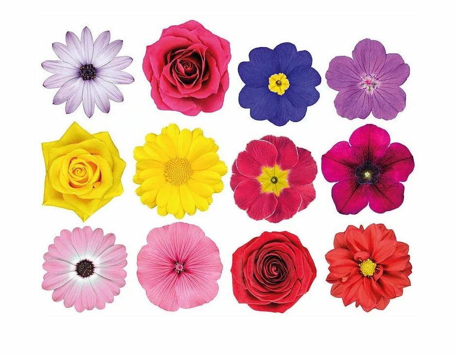 Прикольными надписями, цветы картинки цветные для оформления распечатать и вырезать
