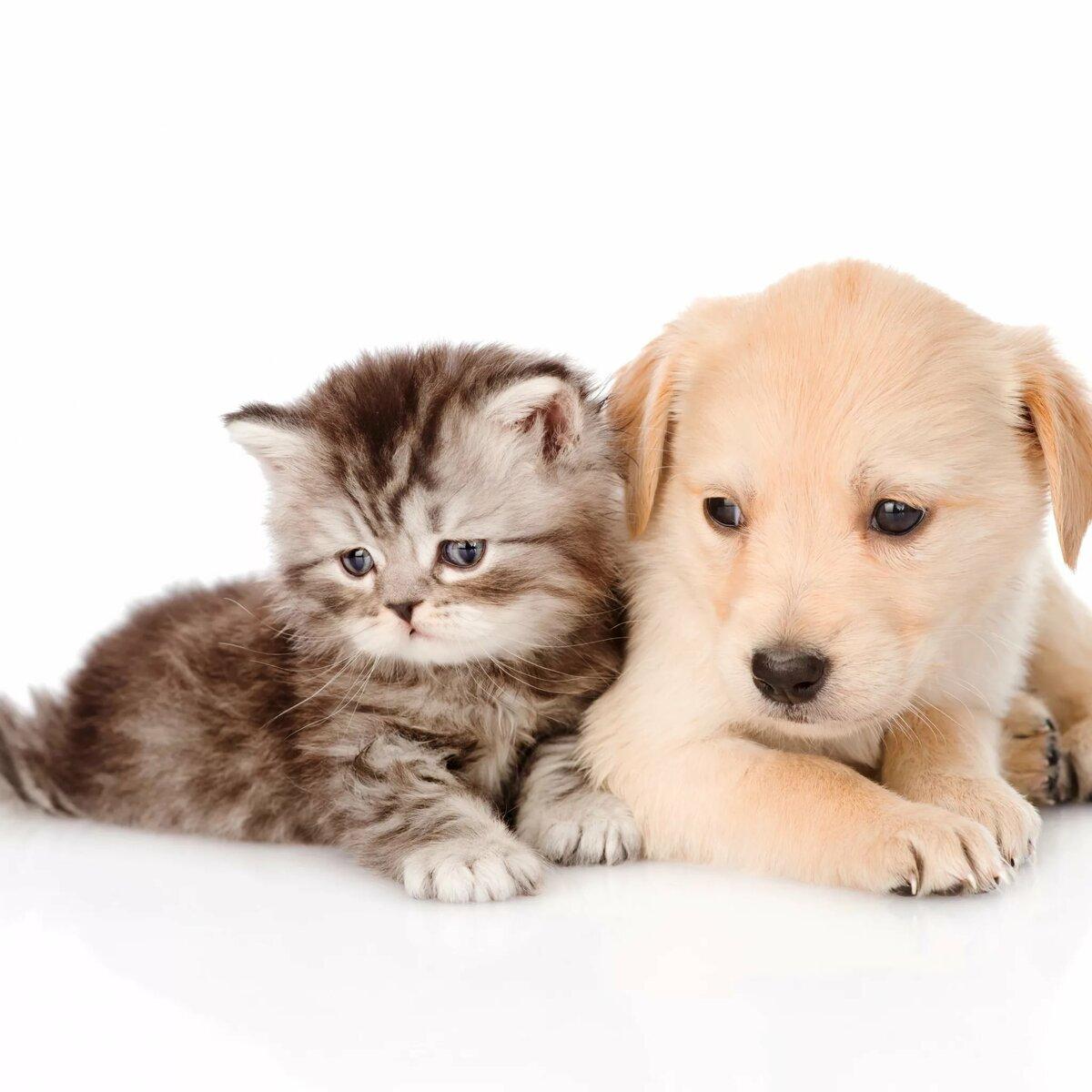 тест, картинки на тему котята и щенята хлам