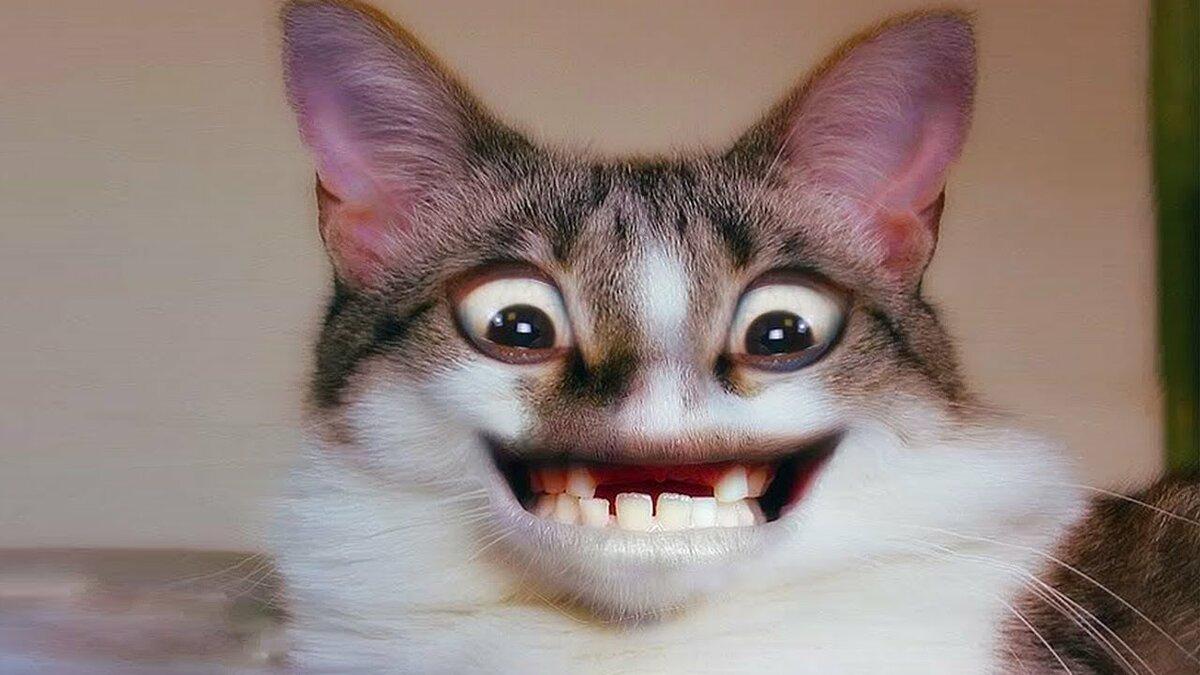 Картинки смешные видео про кошек до слез