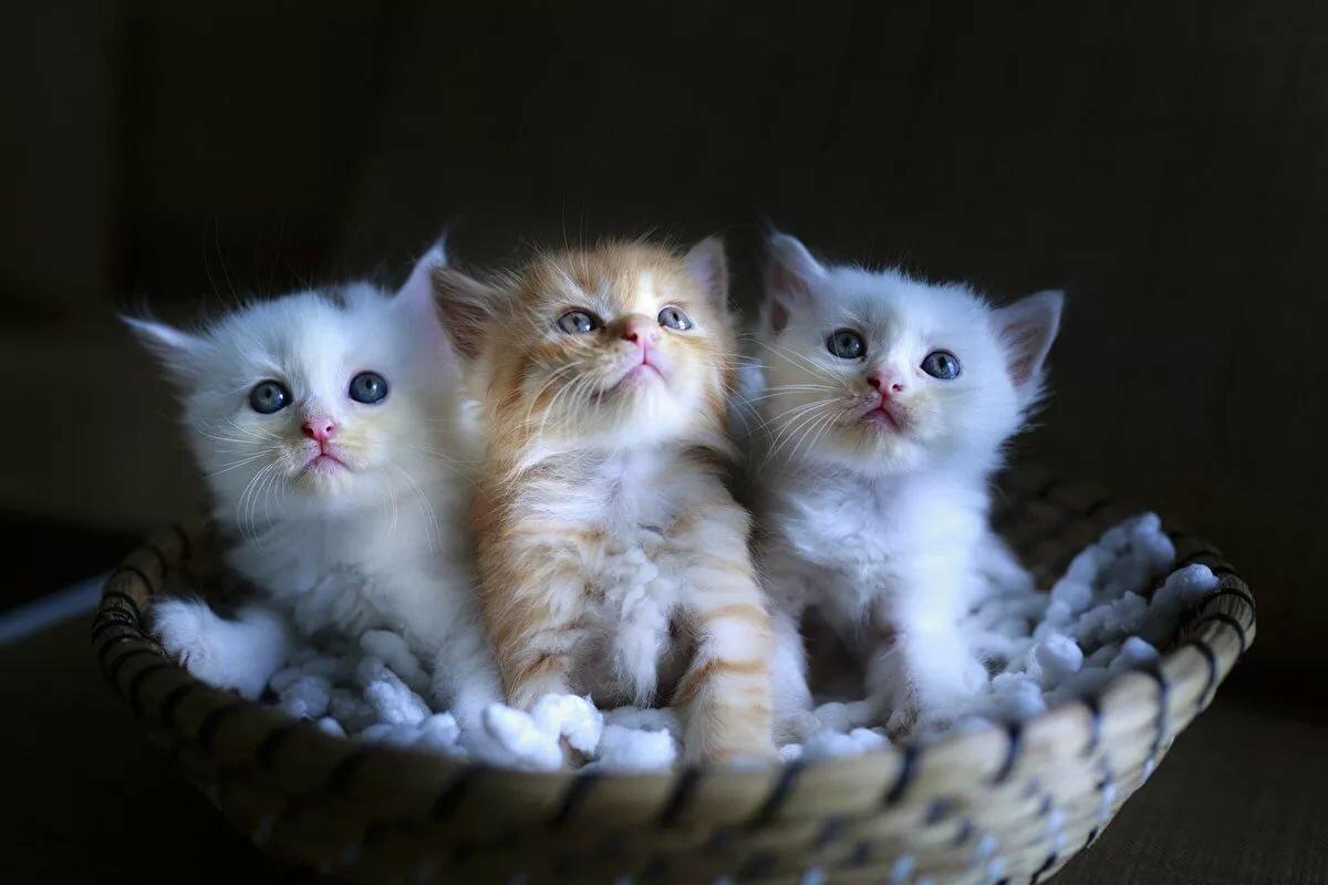 Прикольные смешные картинки с котятами