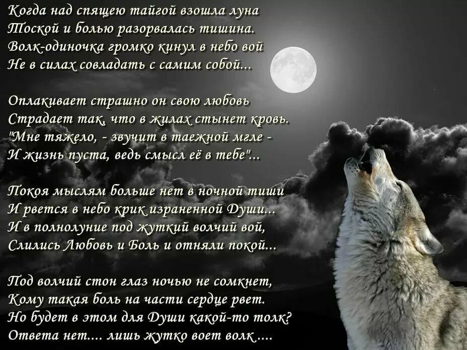 Картинки с стихами одинокий волк